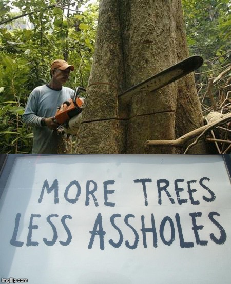 More Trees... | image tagged in forests,climate change,global warming,illegal logging,sustainability,eco spirituality | made w/ Imgflip meme maker