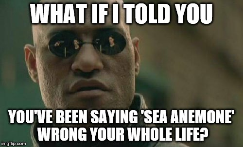 Matrix Morpheus Meme | WHAT IF I TOLD YOU YOU'VE BEEN SAYING 'SEA ANEMONE' WRONG YOUR WHOLE LIFE? | image tagged in memes,matrix morpheus | made w/ Imgflip meme maker