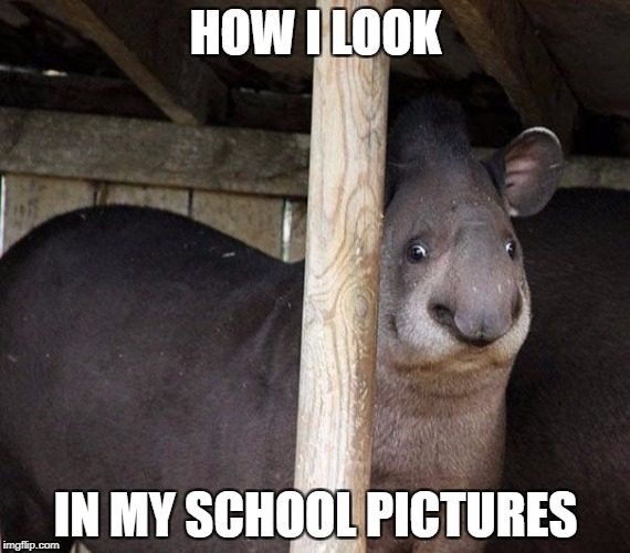 HOW I LOOK IN MY SCHOOL PICTURES | image tagged in school pictures,fail,unphotogenic animals | made w/ Imgflip meme maker