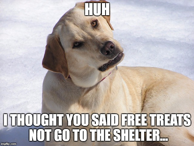 HUH I THOUGHT YOU SAID FREE TREATS NOT GO TO THE SHELTER... | image tagged in dog huh | made w/ Imgflip meme maker