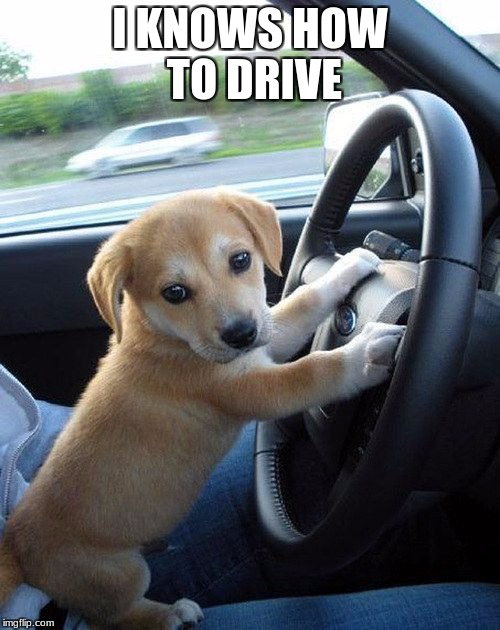 I KNOWS HOW TO DRIVE | image tagged in cute dog | made w/ Imgflip meme maker