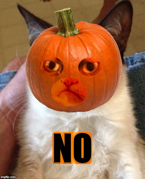 NO | image tagged in grumpy cat,pumpkin,grumpy cat is not amused,halloween,no | made w/ Imgflip meme maker