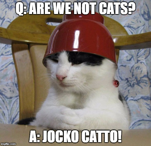 Jocko Catto. | Q: ARE WE NOT CATS? A: JOCKO CATTO! | image tagged in bowlcat,devo,cat,cats,lolcats | made w/ Imgflip meme maker