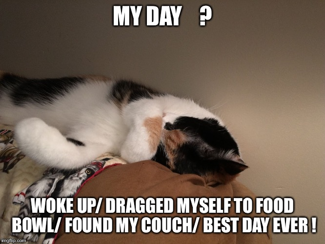 MY DAY    ? WOKE UP/ DRAGGED MYSELF TO FOOD BOWL/ FOUND MY COUCH/ BEST DAY EVER ! | image tagged in kat knapper | made w/ Imgflip meme maker