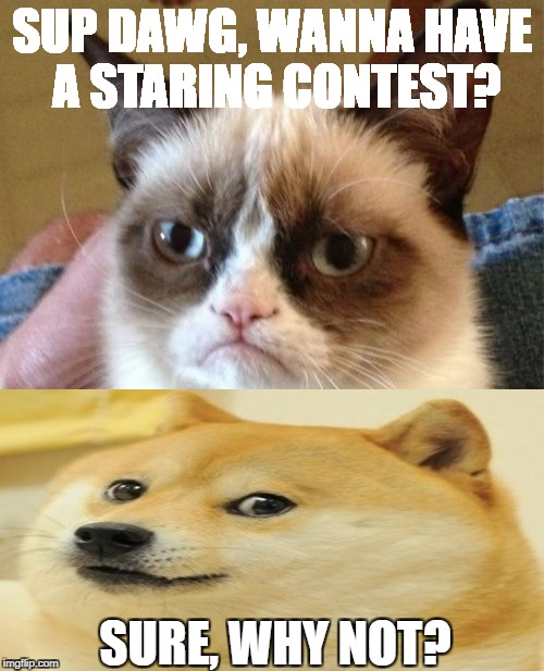 Staring Contest?? | SUP DAWG, WANNA HAVE A STARING CONTEST? SURE, WHY NOT? | image tagged in memes,grumpy cat,doge | made w/ Imgflip meme maker