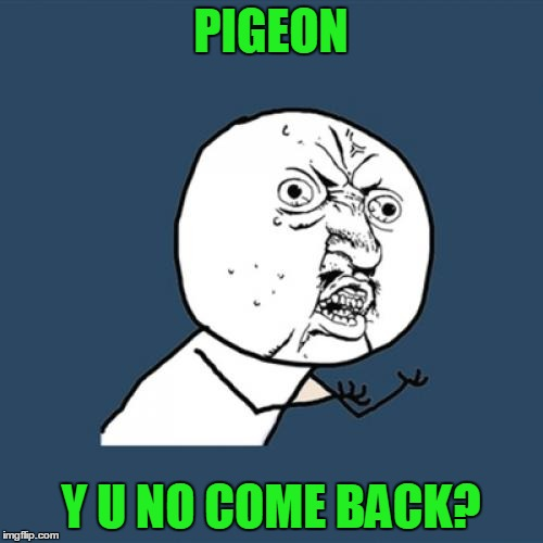Y U No Meme | PIGEON Y U NO COME BACK? | image tagged in memes,y u no | made w/ Imgflip meme maker