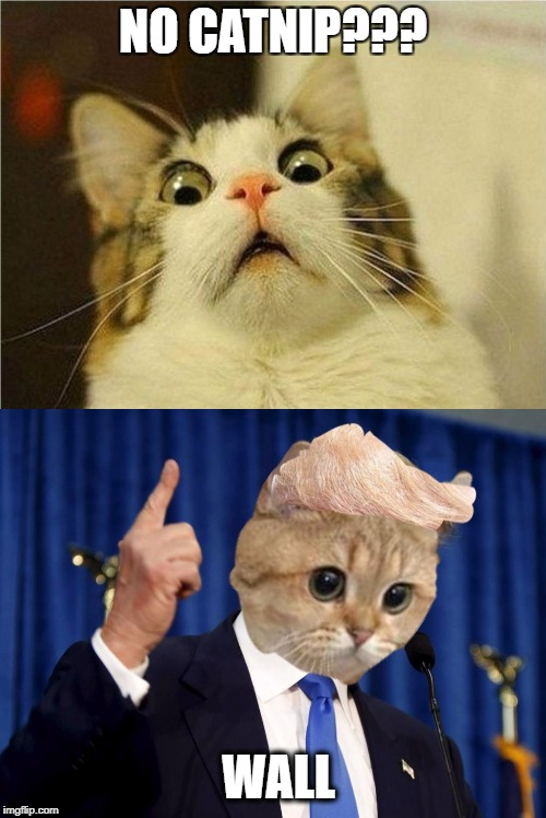 Triggered Trump Cat | NO CATNIP??? WALL | image tagged in cat,donald trump,trump,triggered | made w/ Imgflip meme maker