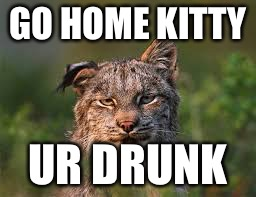 Drunk | GO HOME KITTY UR DRUNK | image tagged in drunk cat | made w/ Imgflip meme maker
