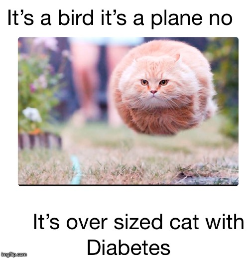image tagged in diabetes | made w/ Imgflip meme maker