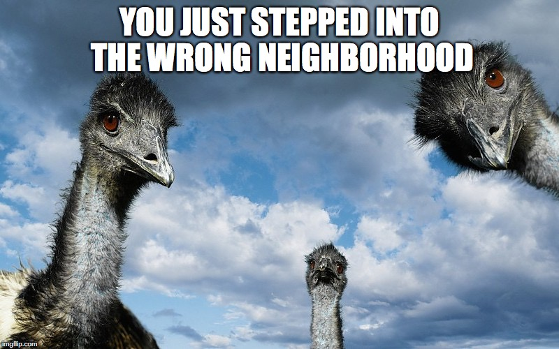 Its about to go down | YOU JUST STEPPED INTO THE WRONG NEIGHBORHOOD | image tagged in neighborhood,ostrich | made w/ Imgflip meme maker