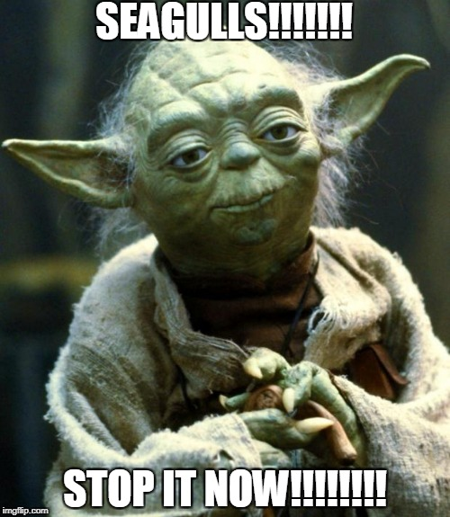 Star Wars Yoda Meme | SEAGULLS!!!!!!! STOP IT NOW!!!!!!!! | image tagged in memes,star wars yoda | made w/ Imgflip meme maker