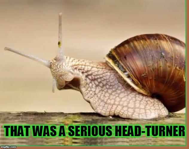 Now, You've Got My Attention! | THAT WAS A SERIOUS HEAD-TURNER | image tagged in vince vance,attention-getter,sammy the snail,escargot,now wait a minute,snails | made w/ Imgflip meme maker