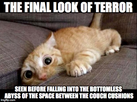 You never know what you'll find down there | THE FINAL LOOK OF TERROR SEEN BEFORE FALLING INTO THE BOTTOMLESS ABYSS OF THE SPACE BETWEEN THE COUCH CUSHIONS | image tagged in cat,couch | made w/ Imgflip meme maker
