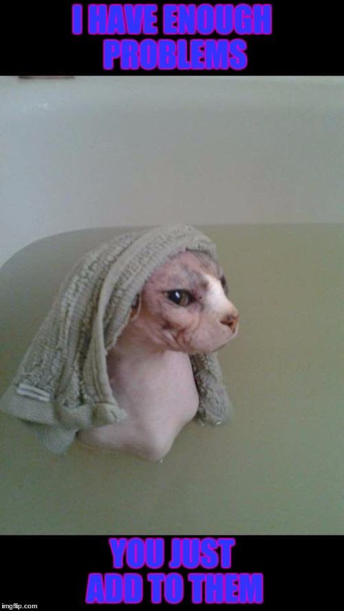 Hairless Cat Bath | I HAVE ENOUGH PROBLEMS YOU JUST ADD TO THEM | image tagged in hairless cat bath | made w/ Imgflip meme maker