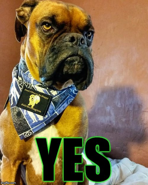 Grumpy Dog | YES | image tagged in grumpy dog | made w/ Imgflip meme maker
