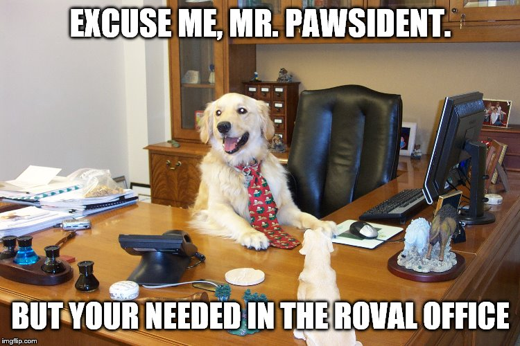 EXCUSE ME, MR. PAWSIDENT. BUT YOUR NEEDED IN THE ROVAL OFFICE | image tagged in president,dogs,punny | made w/ Imgflip meme maker