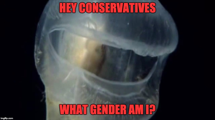 HEY CONSERVATIVES WHAT GENDER AM I? | made w/ Imgflip meme maker