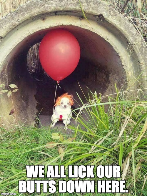 Pupwise the Clown Dog.  | WE ALL LICK OUR BUTTS DOWN HERE. | image tagged in it,funny,doggo,funny memes,dog,funny meme | made w/ Imgflip meme maker