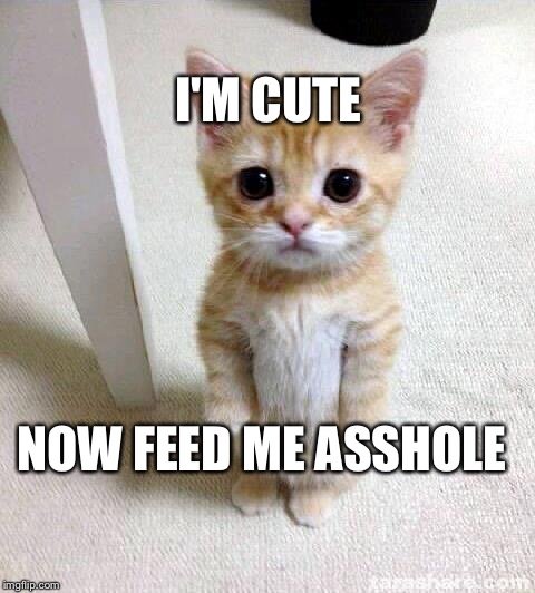 Cute Cat |  I'M CUTE; NOW FEED ME ASSHOLE | image tagged in memes,cute cat | made w/ Imgflip meme maker