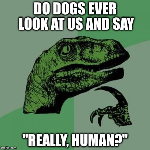 "Philosoraptor Meme | DO DOGS EVER LOOK AT US AND SAY ""REALLY, HUMAN?"" 