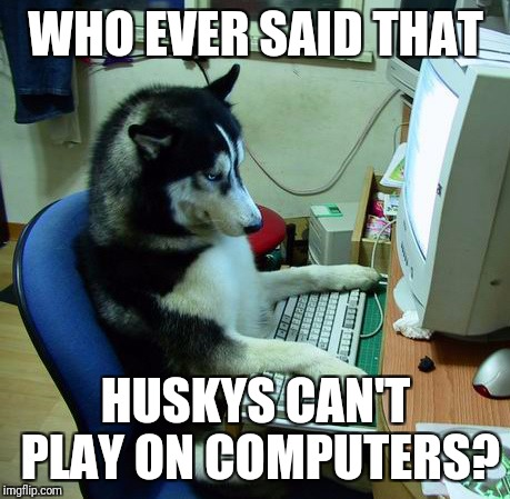 I Have No Idea What I Am Doing Meme | WHO EVER SAID THAT HUSKYS CAN'T PLAY ON COMPUTERS? | image tagged in memes,i have no idea what i am doing | made w/ Imgflip meme maker