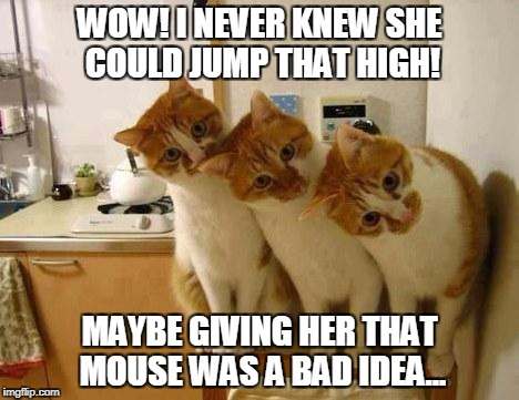 WOW! I NEVER KNEW SHE COULD JUMP THAT HIGH! MAYBE GIVING HER THAT MOUSE WAS A BAD IDEA... | image tagged in 3 funny cats,funny memes,memes,animals,funny animals | made w/ Imgflip meme maker