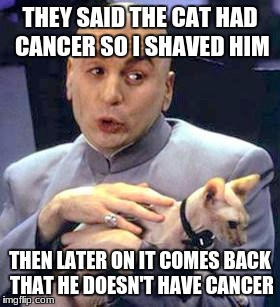 Dr Evil Cat | THEY SAID THE CAT HAD CANCER SO I SHAVED HIM THEN LATER ON IT COMES BACK THAT HE DOESN'T HAVE CANCER | image tagged in dr evil cat | made w/ Imgflip meme maker