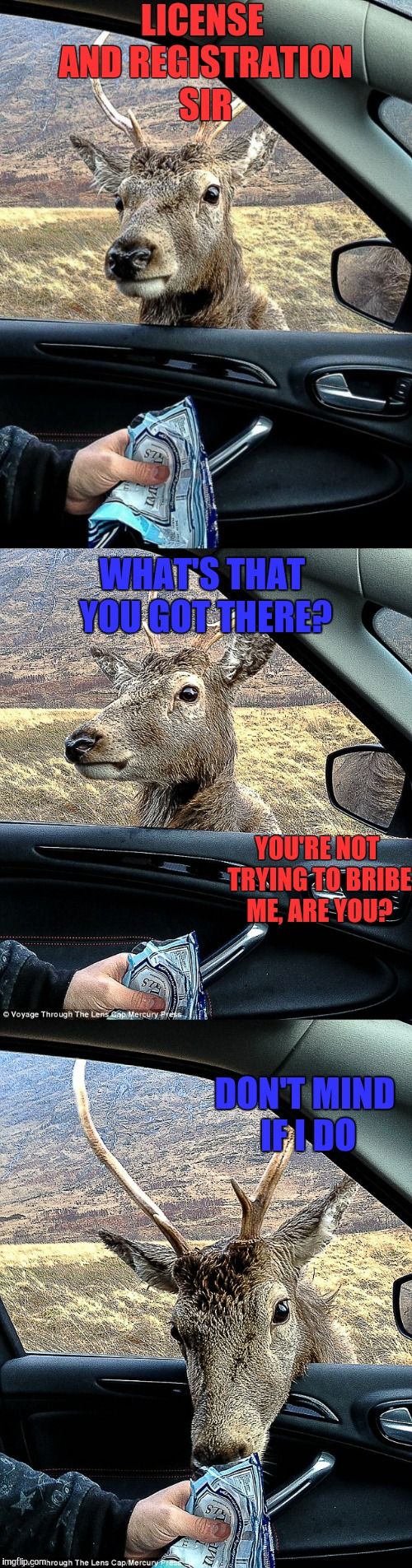Police Officer Deer | LICENSE AND REGISTRATION SIR DON'T MIND IF I DO WHAT'S THAT YOU GOT THERE? YOU'RE NOT TRYING TO BRIBE ME, ARE YOU? | image tagged in cops,memes,funny,deer | made w/ Imgflip meme maker