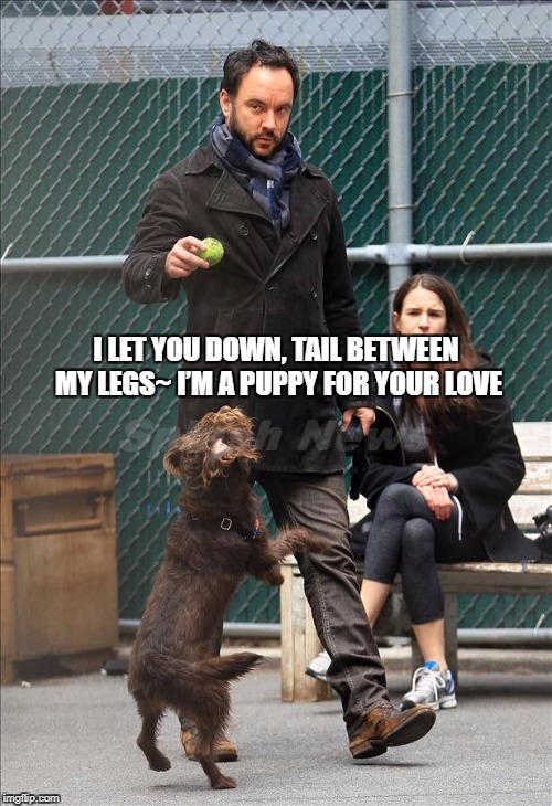 DMB Let You Down | I LET YOU DOWN, TAIL BETWEEN MY LEGS~ I'M A PUPPY FOR YOUR LOVE | image tagged in dmb,dave matthews band,dave matthews,let you down,puppy for your love,dog | made w/ Imgflip meme maker