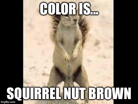 Squirrel nuts |  COLOR IS... SQUIRREL NUT BROWN | image tagged in squirrel nuts | made w/ Imgflip meme maker