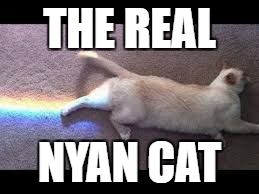 Nyan Cat | THE REAL NYAN CAT | image tagged in cat,nyan cat,game,rainbow,cats | made w/ Imgflip meme maker
