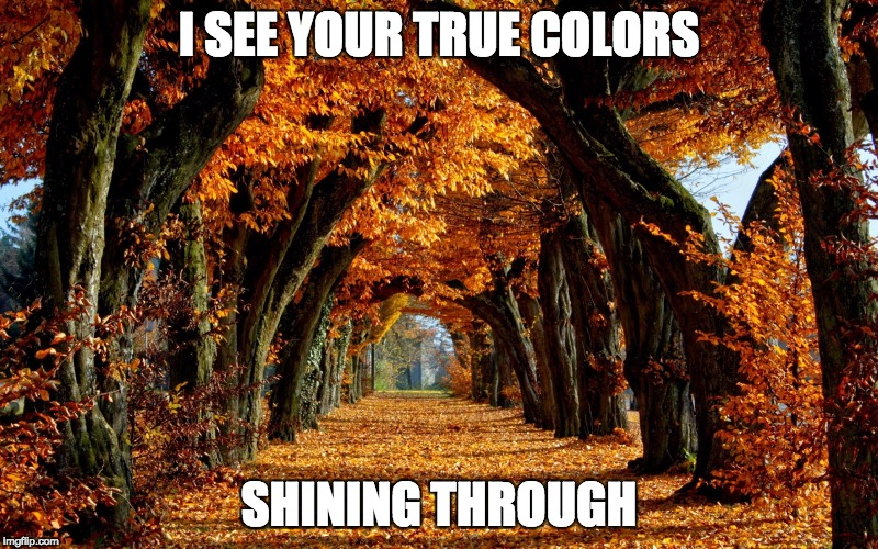 I SEE YOUR TRUE COLORS SHINING THROUGH | image tagged in autumn leaves | made w/ Imgflip meme maker