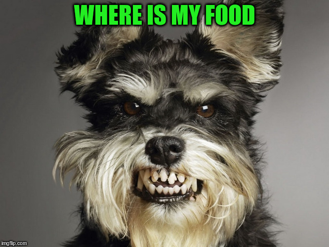 WHERE IS MY FOOD | made w/ Imgflip meme maker