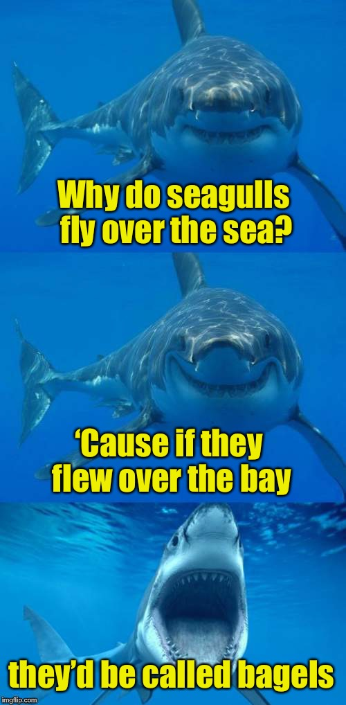 Bad Shark Pun  | Why do seagulls fly over the sea? 'Cause if they flew over the bay they'd be called bagels | image tagged in bad shark pun | made w/ Imgflip meme maker