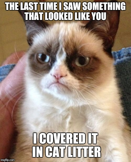 Grumpy Cat Meme | THE LAST TIME I SAW SOMETHING THAT LOOKED LIKE YOU I COVERED IT IN CAT LITTER | image tagged in memes,grumpy cat,funny | made w/ Imgflip meme maker