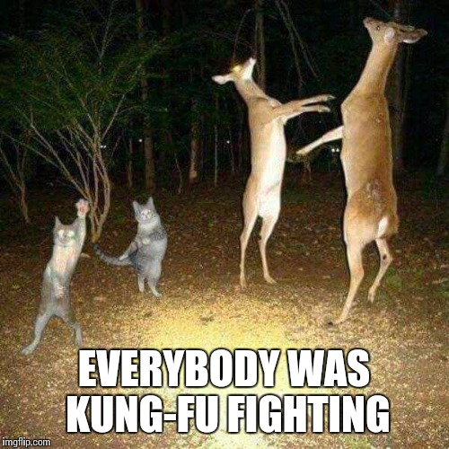 Funny trail cam pics |  EVERYBODY WAS KUNG-FU FIGHTING | image tagged in kung fu,deer,hunting,cats,memes | made w/ Imgflip meme maker