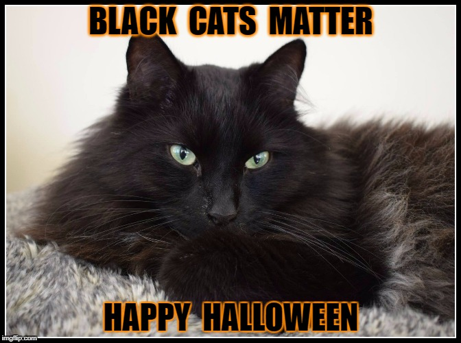 Black Cats Matter | BLACK  CATS  MATTER HAPPY  HALLOWEEN | image tagged in cats | made w/ Imgflip meme maker
