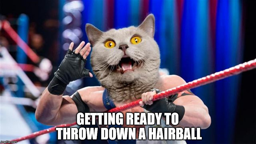 GETTING READY TO THROW DOWN A HAIRBALL | made w/ Imgflip meme maker