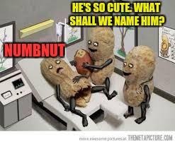 HE'S SO CUTE. WHAT SHALL WE NAME HIM? NUMBNUT | made w/ Imgflip meme maker