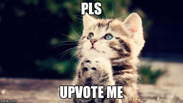 Upvote me! | PLS UPVOTE ME | image tagged in cute kitten | made w/ Imgflip meme maker