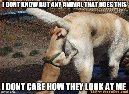 I DONT KNOW BUT ANY ANIMAL THAT DOES THIS I DONT CARE HOW THEY LOOK AT ME | made w/ Imgflip meme maker