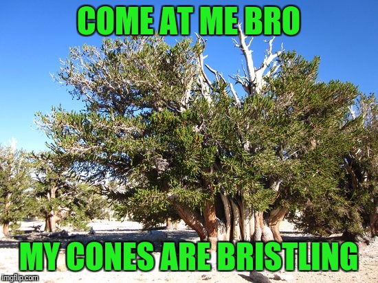 COME AT ME BRO MY CONES ARE BRISTLING | made w/ Imgflip meme maker