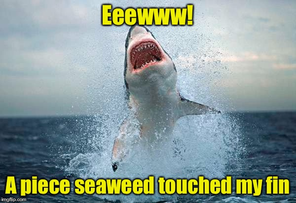 Overly sensitive shard | Eeewww! A piece seaweed touched my fin | image tagged in memes,shark | made w/ Imgflip meme maker