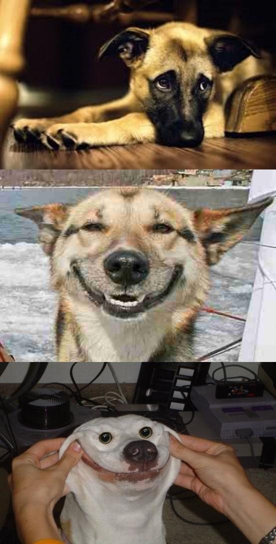 Sad dog,happy dog,happiest dog. Blank Template - Imgflip