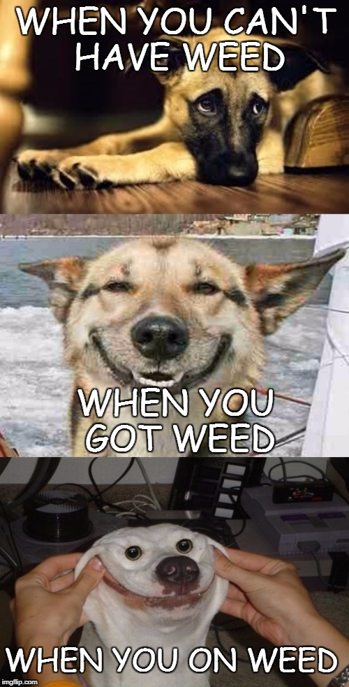 WHEN YOU CAN'T HAVE WEED WHEN YOU GOT WEED WHEN YOU ON WEED | image tagged in sad dog,happy dog,happiest dog | made w/ Imgflip meme maker