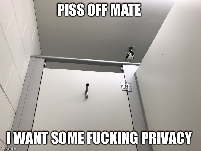 I want privacy  | PISS OFF MATE I WANT SOME F**KING PRIVACY | image tagged in sex offender bird,memes,fuck off,cunt | made w/ Imgflip meme maker