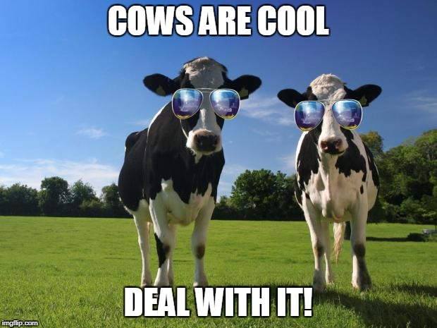 cool cows | COWS ARE COOL DEAL WITH IT! | image tagged in cool cows | made w/ Imgflip meme maker