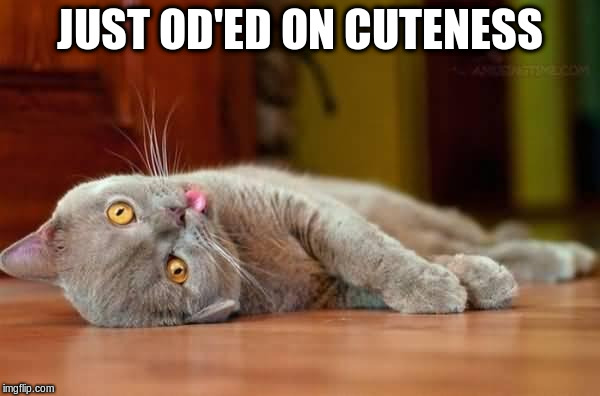 JUST OD'ED ON CUTENESS | made w/ Imgflip meme maker
