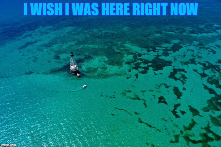 Alligator reef | I WISH I WAS HERE RIGHT NOW | image tagged in florida keys,memes,fishing,vacation,reef,lighthouse | made w/ Imgflip meme maker