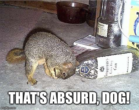 Frustrated Squirrel | THAT'S ABSURD, DOG! | image tagged in frustrated squirrel | made w/ Imgflip meme maker